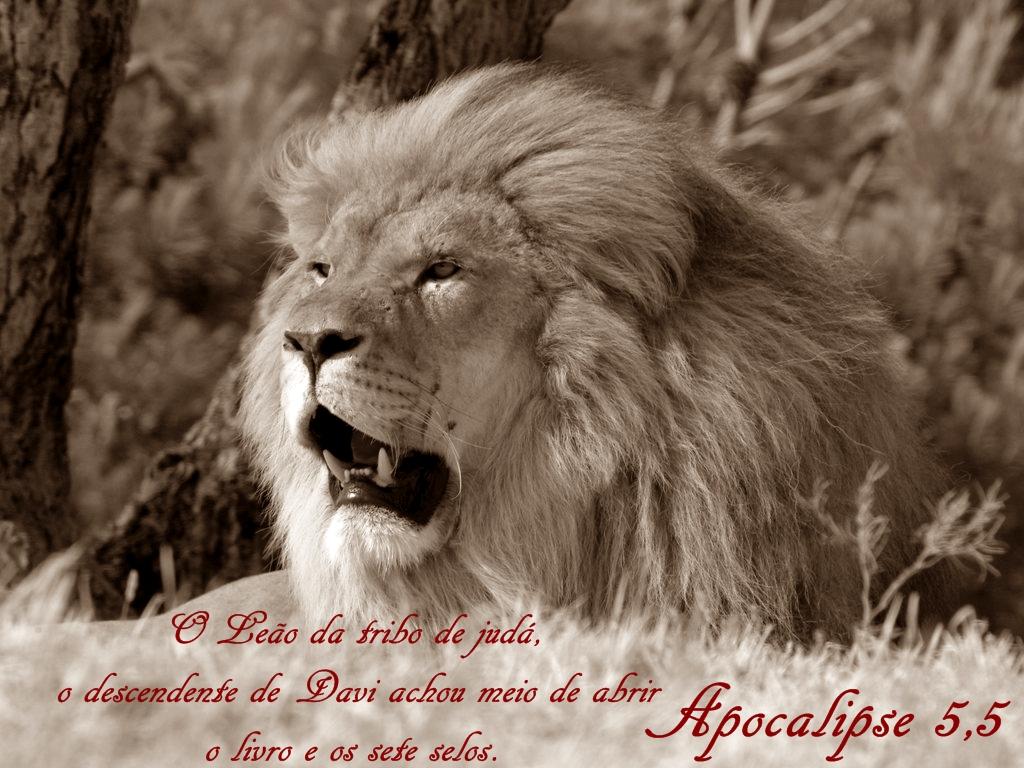 Lion_Resting _African_Park_Sigean _Languedoc Roussillon _France